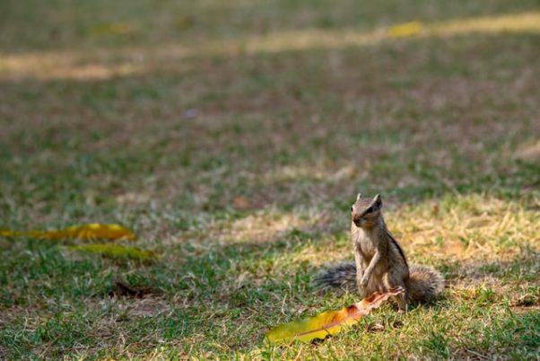A squirl sitting in a yard. (Photo: Sahil Padgilwar/Unsplash)