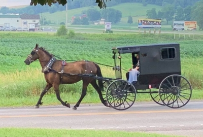 An Amish family riding in a black buggy drawn by a horse. (Photo Troyer's Amish Tours/Facebook)